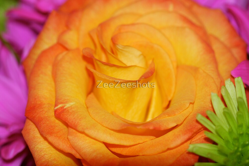 Do you think this rose is Yellow or Orange? by ZeeZeeshots