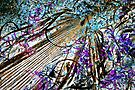 Abstract Nature by Susan McKenzie Bergstrom
