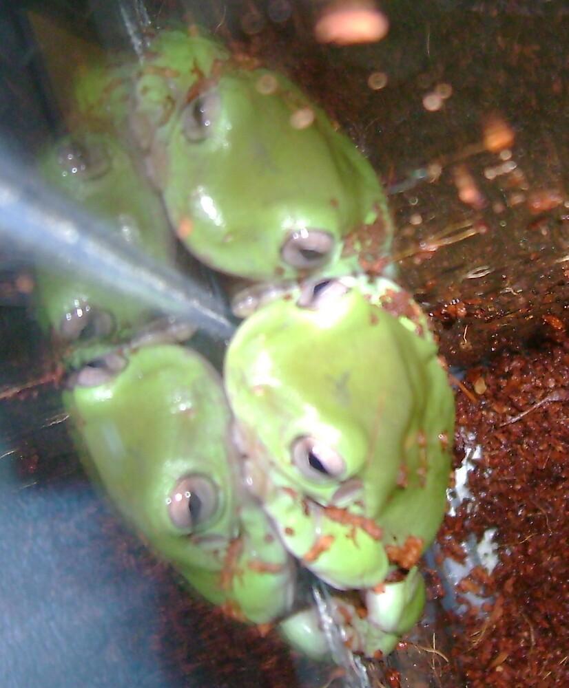 Mr Froggy Reflection by Sheri Scherbarth