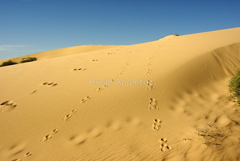 Footprints by Rosie Appleton