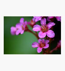 Pink flower, macro photograph Photographic Print