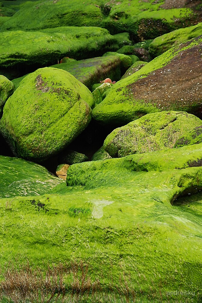Rocks & moss IV by andreisky