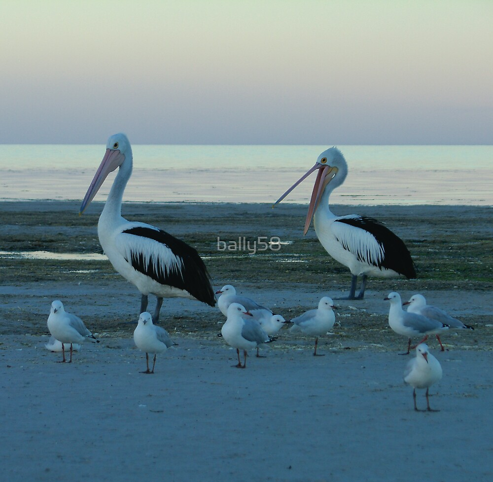 pelicans & seagulls by bally58