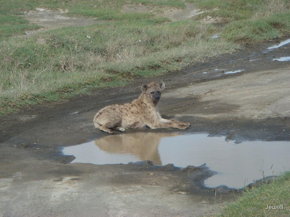Hyena Reflection by Jewell