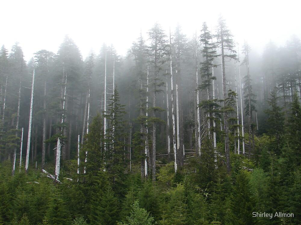 Oregon Wildeness by Shirley Allmon