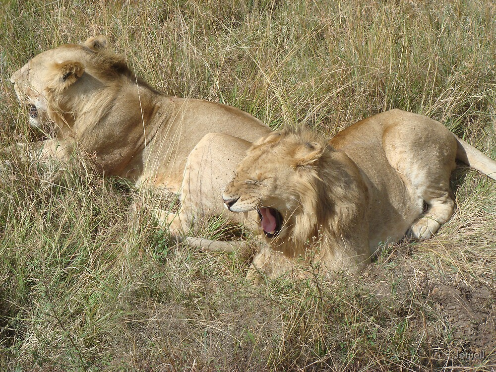 Lions on the Plain by Jewell