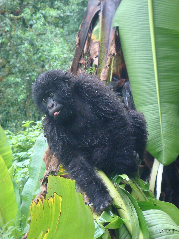 Baby Gorilla by Jewell