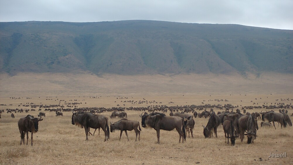 Wildebeast Migration by Jewell
