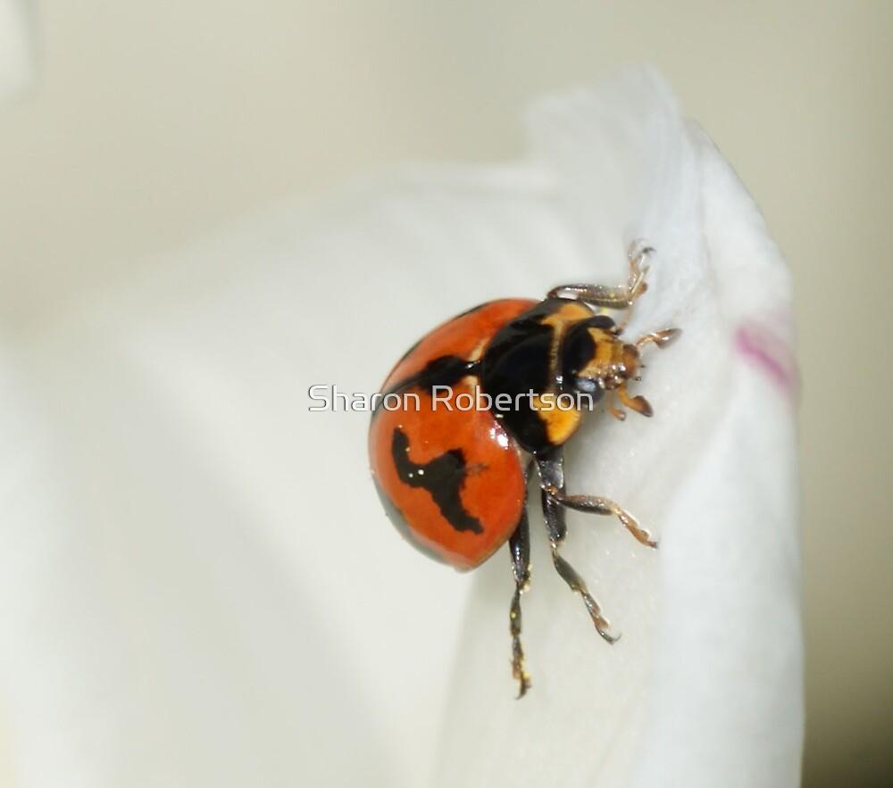 Heaven Ladybug by Sharon Robertson