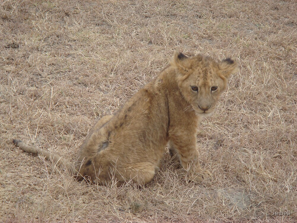 Lion Cub by Jewell