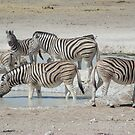 Watering Hole by Jewell