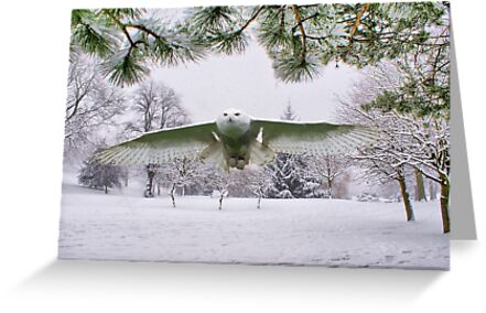 Snowy Owl In A Winter Wonderland by Sandra Cockayne