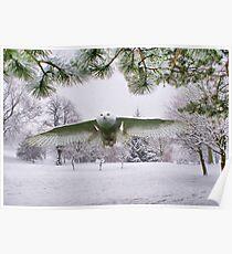 Snowy Owl In A Winter Wonderland Poster