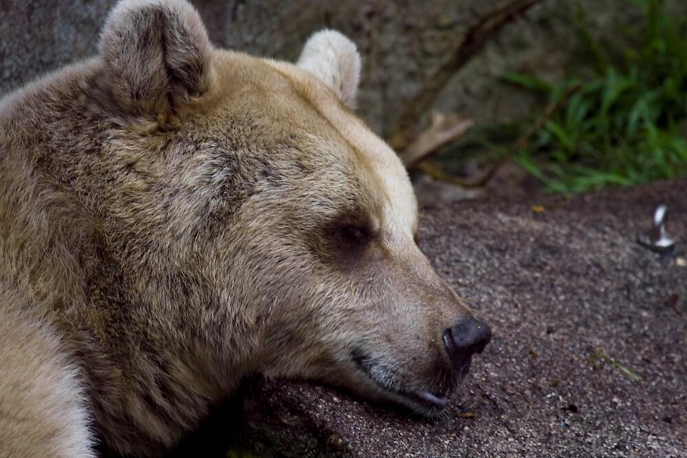 Bear by Michael Freedman