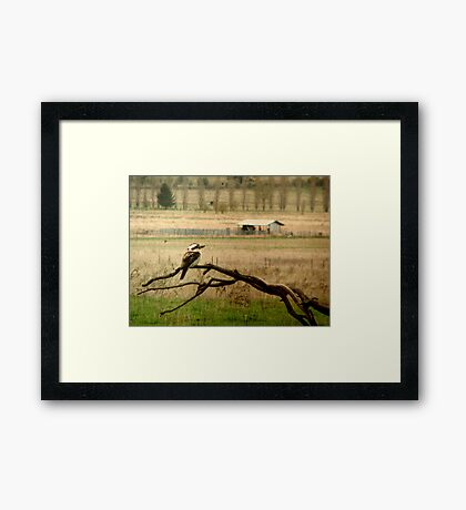 King of the Bush Framed Print