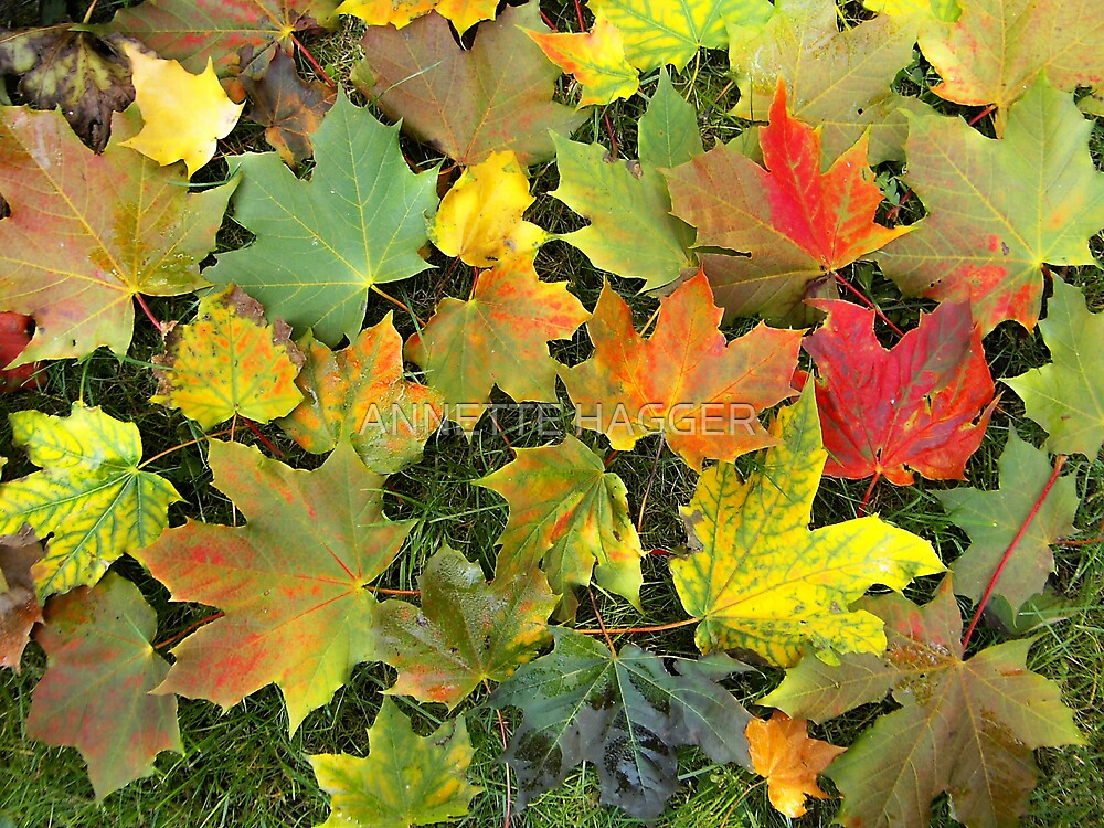 AUTUMN LEAVES by ANNETTE HAGGER