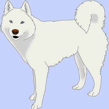 White Husky by shortwinters