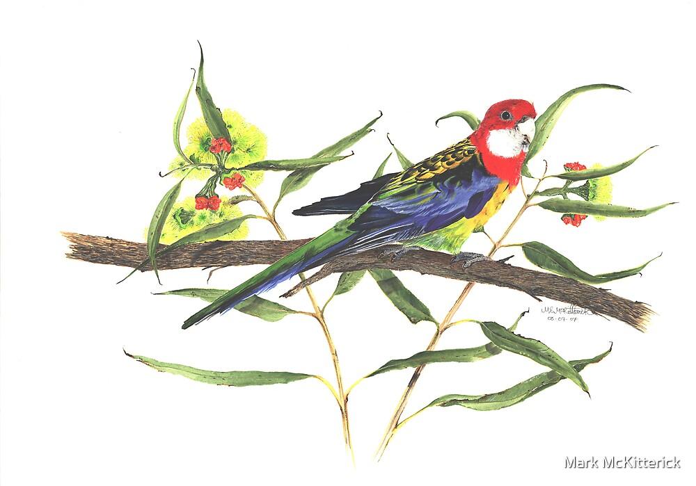 Parrot by Mark McKitterick