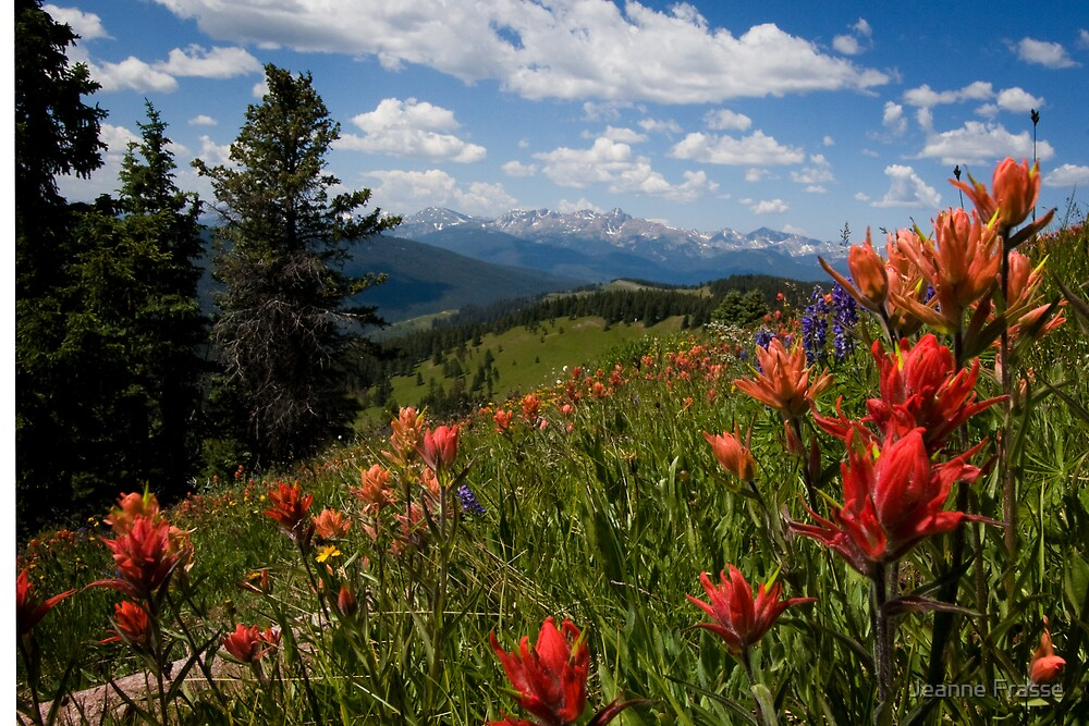 Shrine Pass View to Holy Cross by Jeanne Frasse