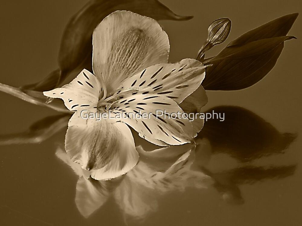 Alstromeria Sepia by GayeLaunder Photography