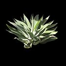Grand Agave by leegee