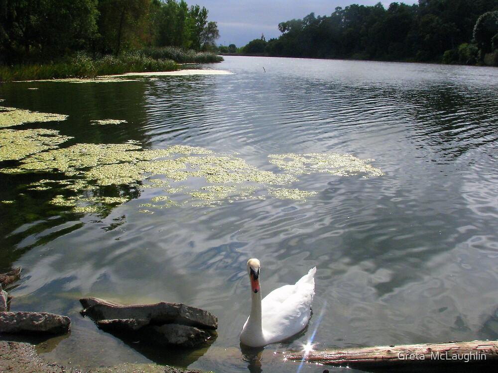 Swan Lake by Greta  McLaughlin