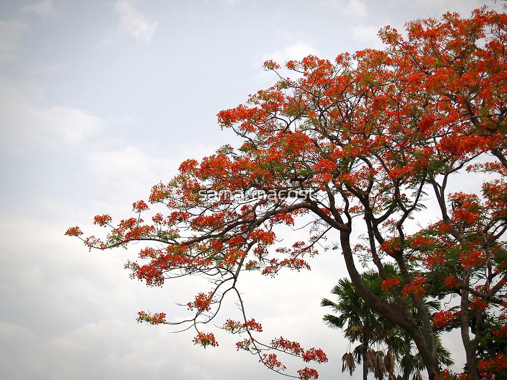 Orange Flowering Tree by samarmacost