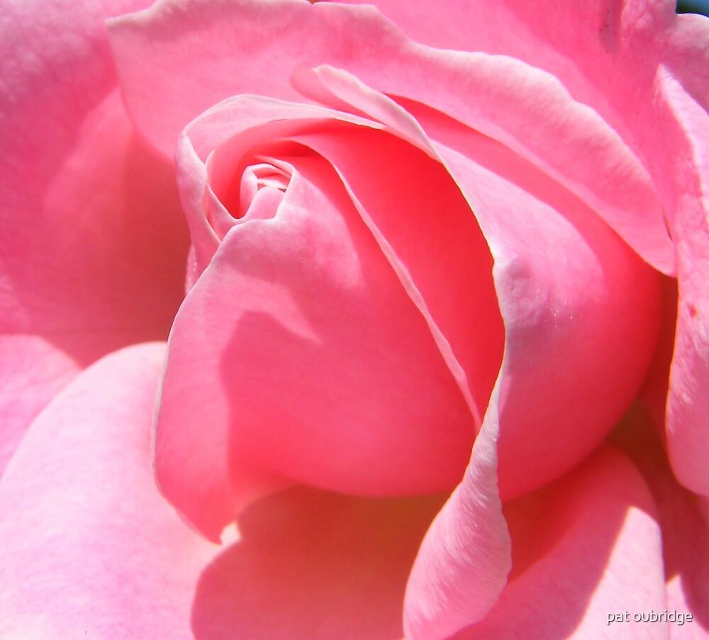 Pink Rose by pat oubridge