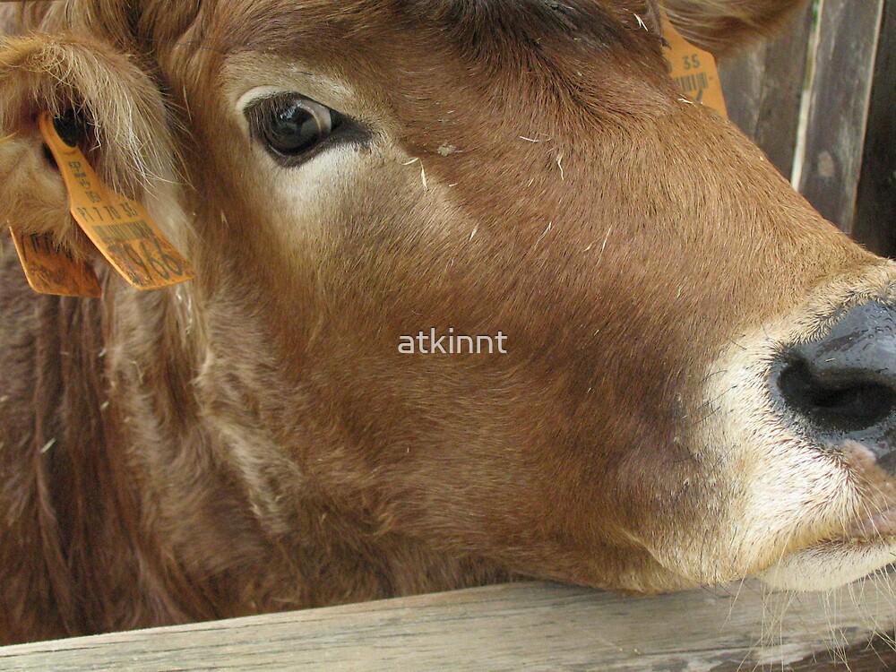 Cow by atkinnt