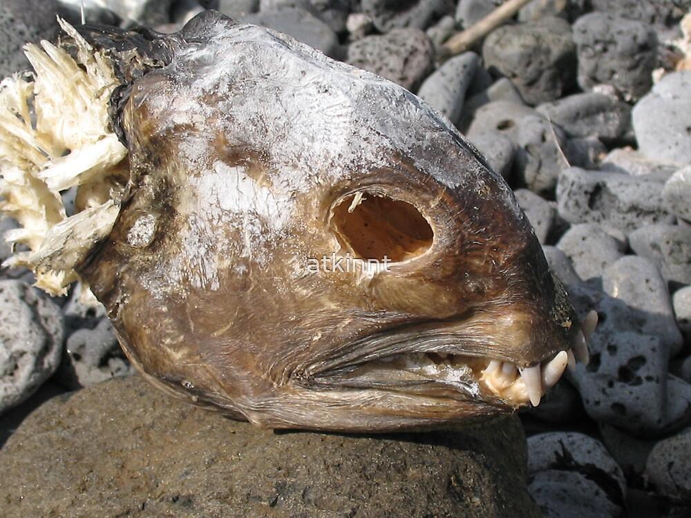 Fish Head Dead by atkinnt