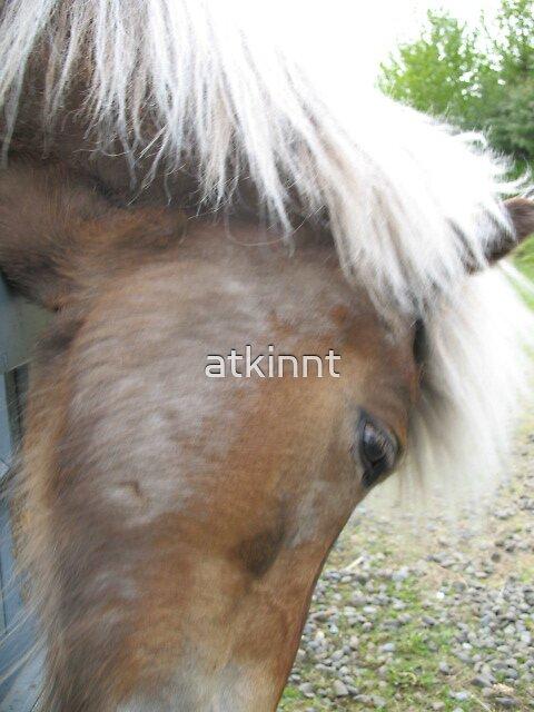 Icelandic Horse by atkinnt