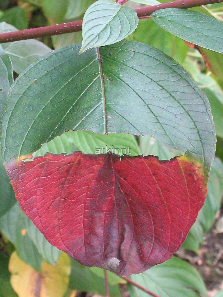 Leaf by atkinnt