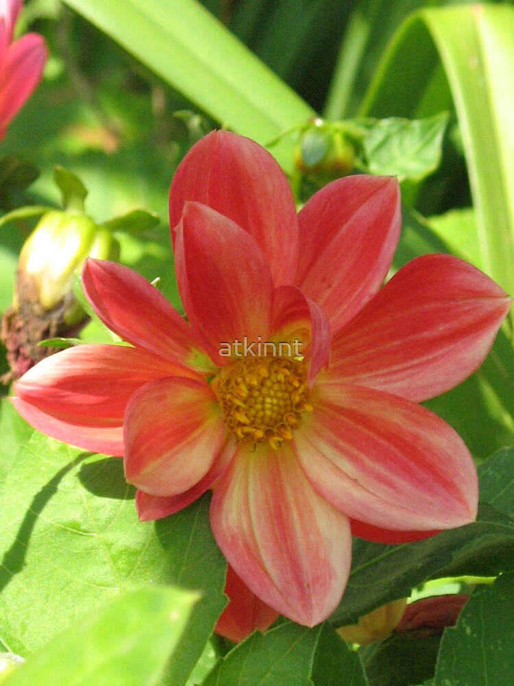 Red/yellow flower by atkinnt
