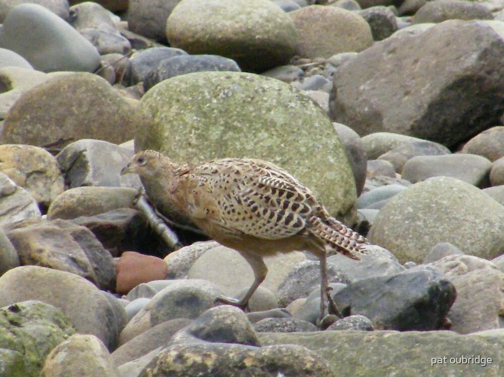 Lady Pheasant by pat oubridge