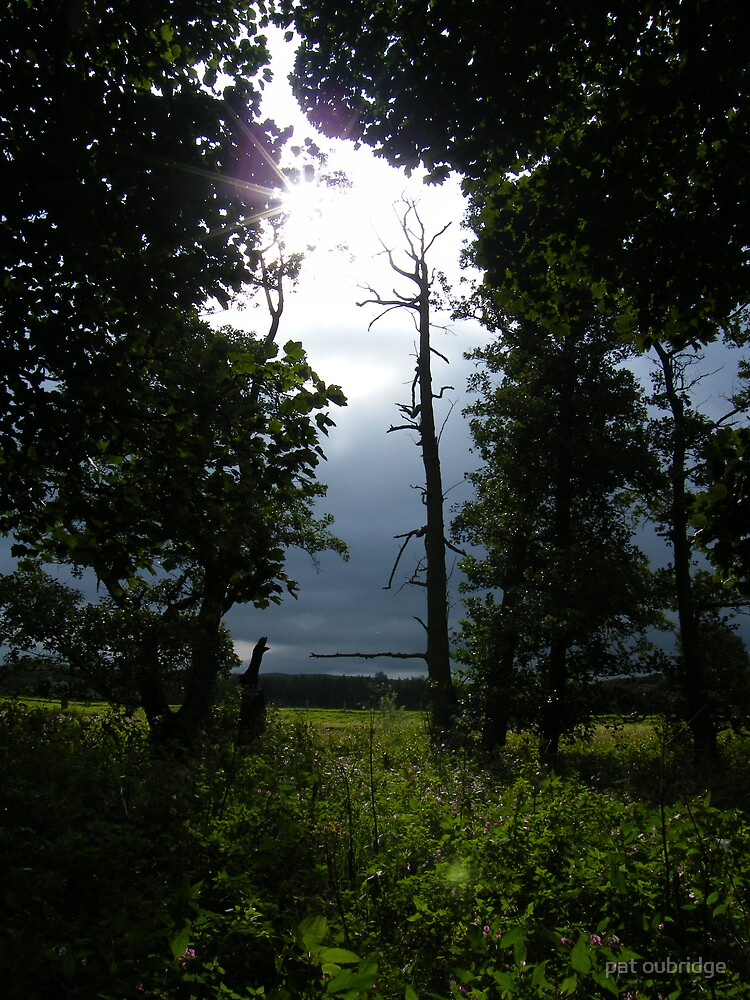 Shine a Light by pat oubridge