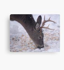 White-Tail Deer Buck Canvas Print