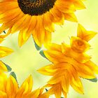 SUNFLOWER - PLAY by Teresa Chipperfield