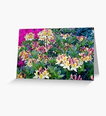rhododendron heaven Greeting Card