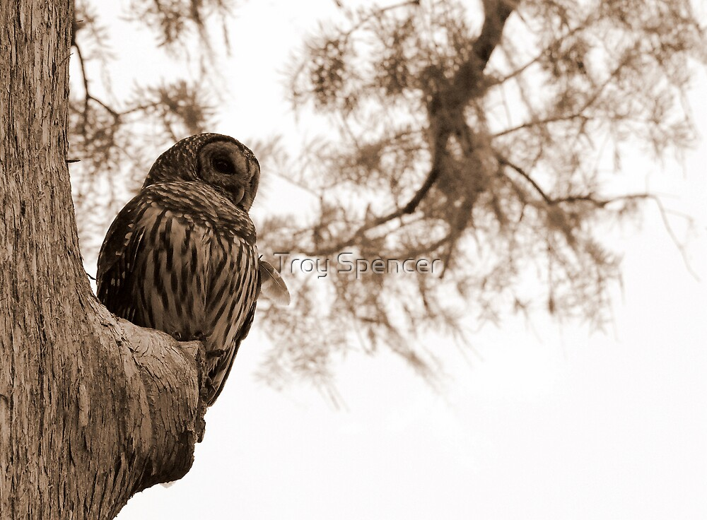 Wacissa Owl: Sepia Tone by Troy Spencer