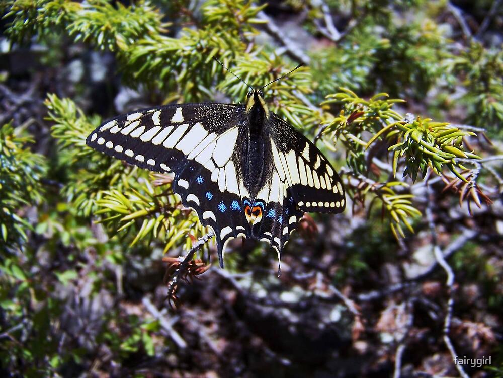 Zebra Butterfly by fairygirl