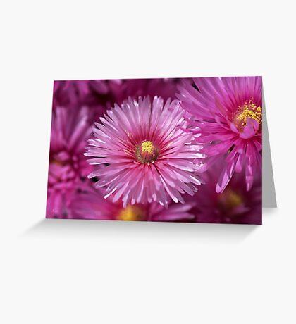Pink Pigface Flowers Greeting Card