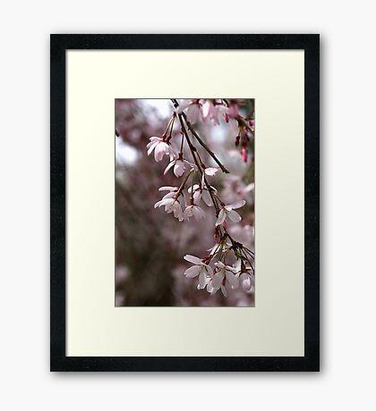 Whisper in the Breeze Framed Print