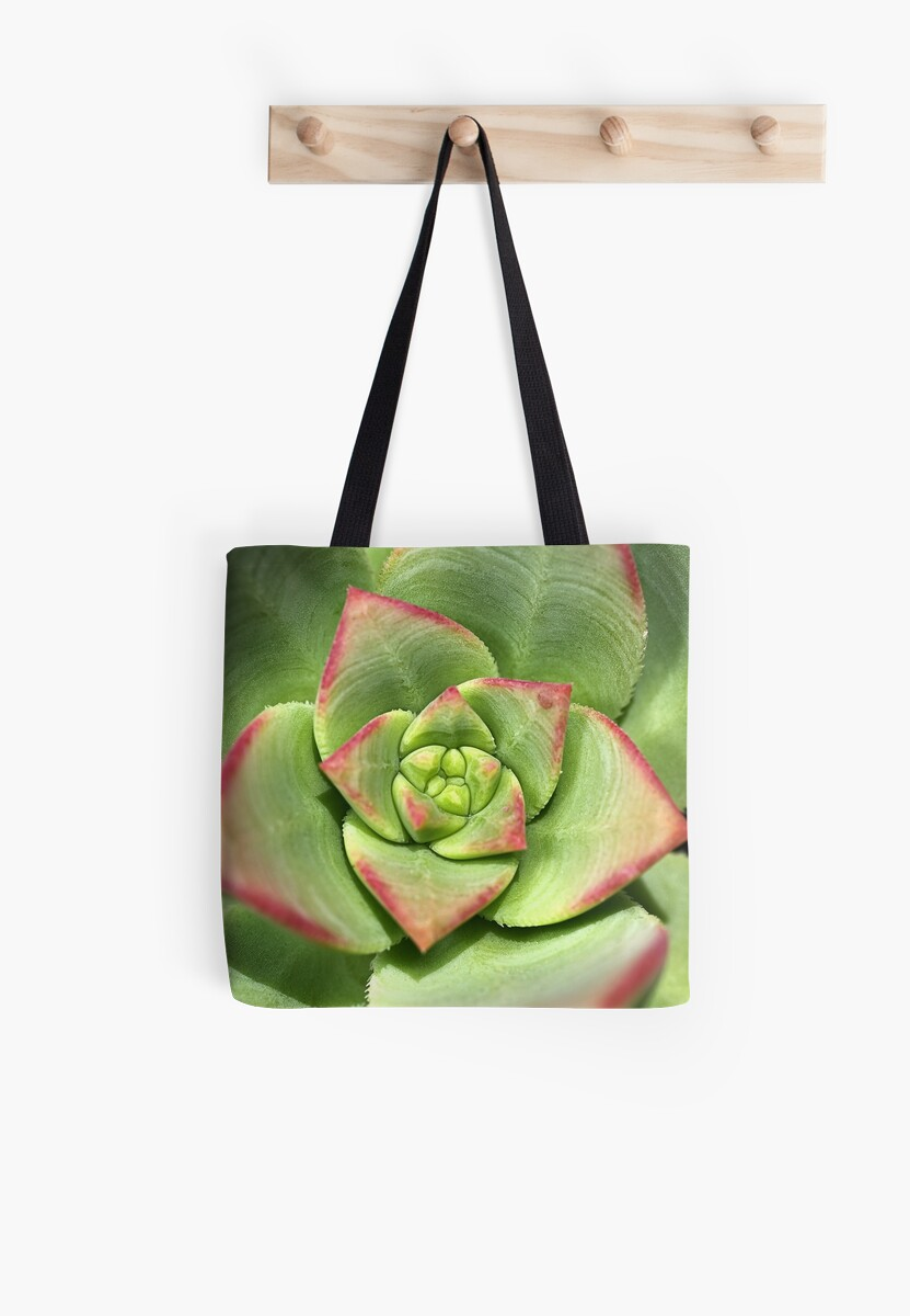 Hens And Chicks Succulent by Joy Watson