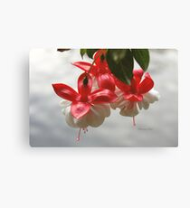 Fuchsia ~ Hanging Over the Lake Canvas Print