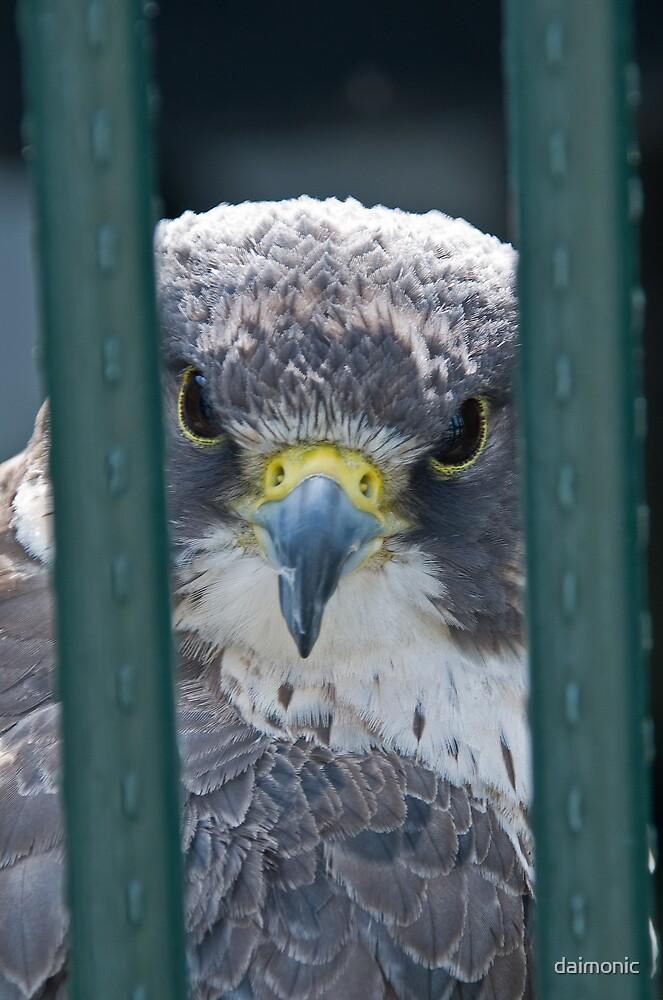 Jailbird by daimonic