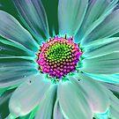 Colorful Daisy by Terri~Lynn Bealle