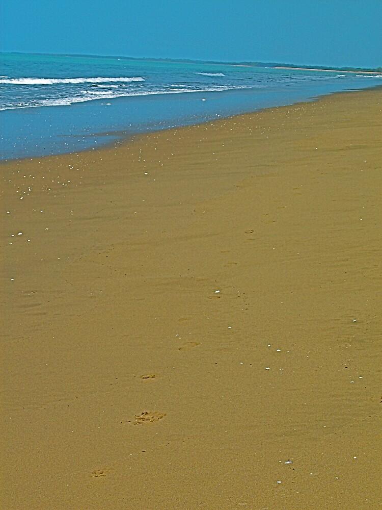 Moore Park Beach by Shomari