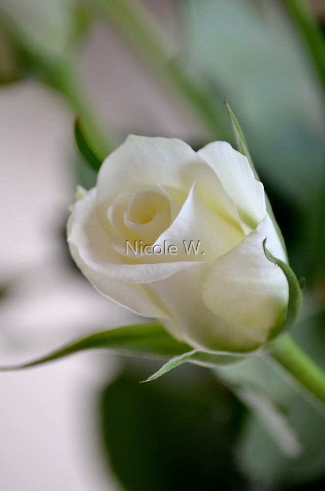 magnificent white by Nicole W.