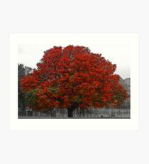 Chestnut Tree II Art Print