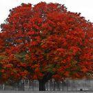 Chestnut Tree II by Chris Clark